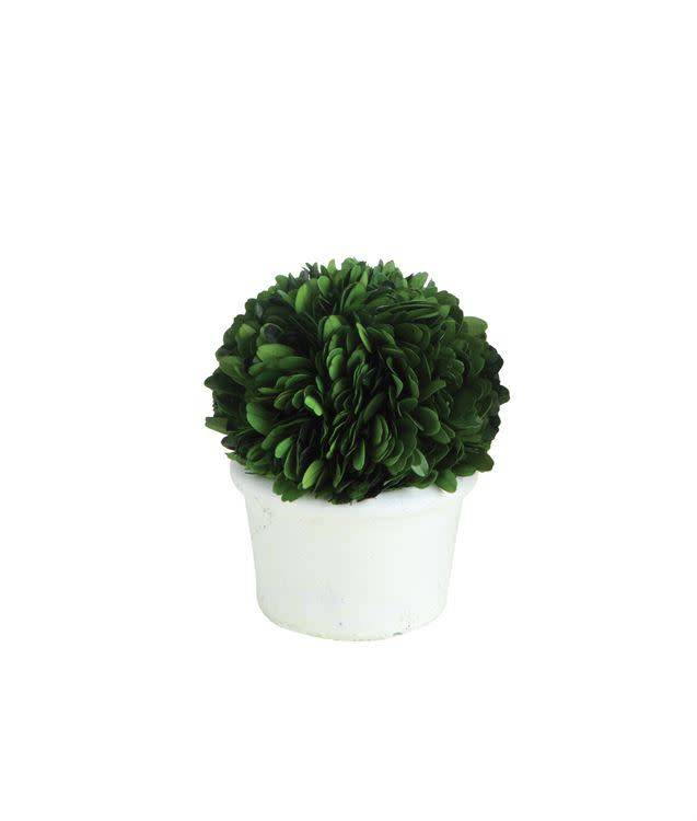 Round Preserved Boxwood Topiary Half Ball in White Clay Pot