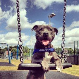 EZY Dog Ezy Dog QuickFit Harness