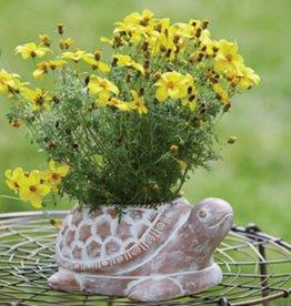 SERRV Turtle Planter