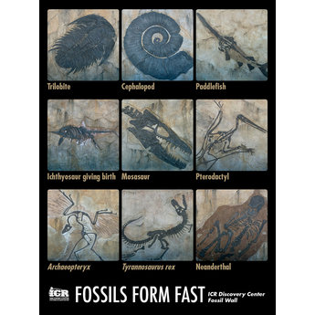 Fossil Wall Poster