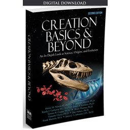 Creation Basics & Beyond, 2nd Ed. - eBook