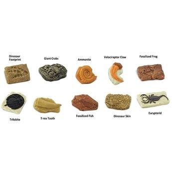 Ancient Fossils TOOB