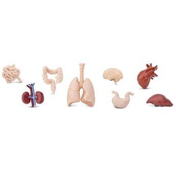Human Organs TOOB