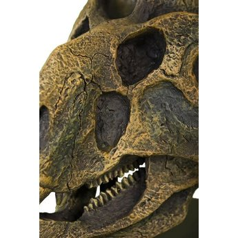 Protoceratops Skull Model