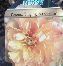 PEONY ITOH SINGING IN THE RAIN #1
