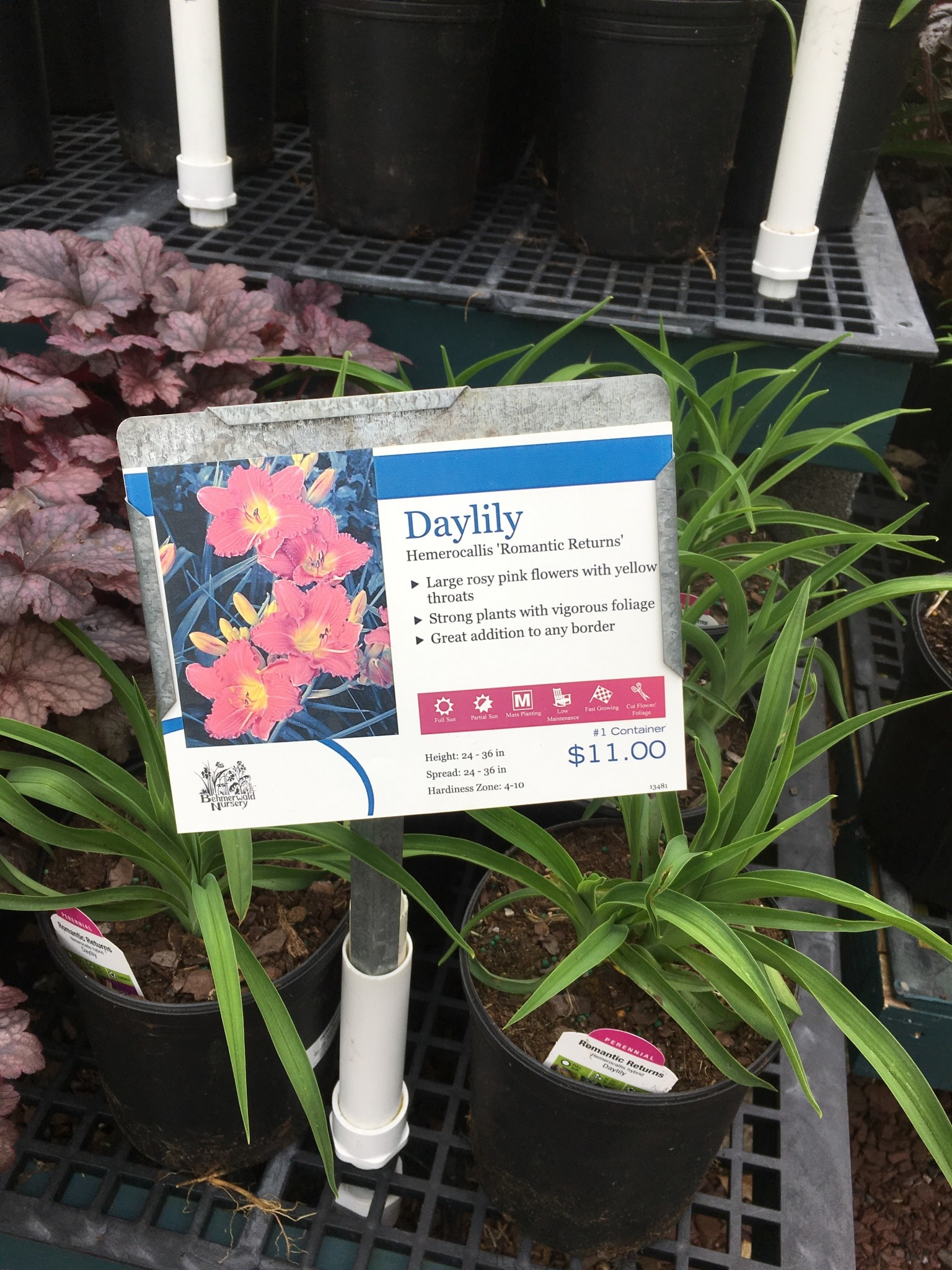 Hemerocallis Romantic Returns Daylily, #1