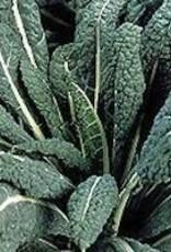 Kale, Lacinato Dinasaur - Vegetable