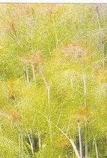 """Fennel, Bronze leaf, 4.5"""" pot"""