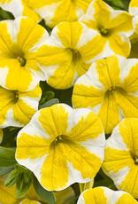 """Calibrachoa Lemon slice, 4.5"""" pot"""