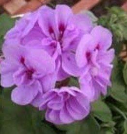 """Geranium,  Lavender, 4.5"""" pot"""