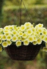"Petunia, Easy Wave Yellow, 4.5"" pot"