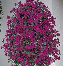 "Petunia, Tidal Wave Purple, 4.5"" pot"