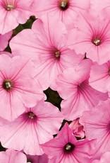 "Petunia, PW Supertunia Vista Bubblegum, 4.5"" pot"