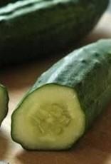 "Cucumber, Patio- Vegetable, 4"" pot"