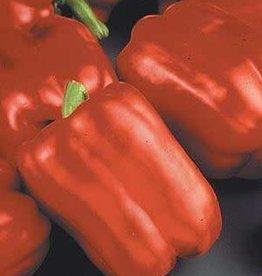 "Pepper, Red Beauty - Vegetable, 4"" pot"