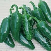 """Pepper, Jalapenno- Vegetable, 4"""" pot"""
