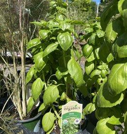 Basil, Sweet Large Leaf, Organic Quart