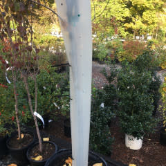 Tree Pro Tree Protector Sm Tree Protector, Tree Pro Small, 36