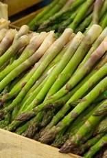 Asparagus, Mary Washington, #1