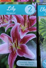 lilium Stargazer, Stargazer lily boxed bulb