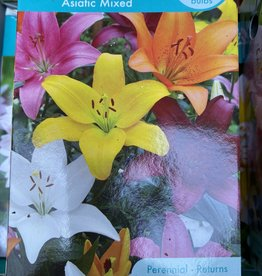 Lilium asiatic, Asian lily mixture boxed