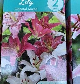 Lilium orientalis, Mixed Oriental Lily boxed