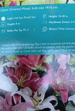 Lilium orientalis, Mixed Oriental Lily