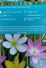 Zephyranthes mixed,  Zephyr Rain Lily