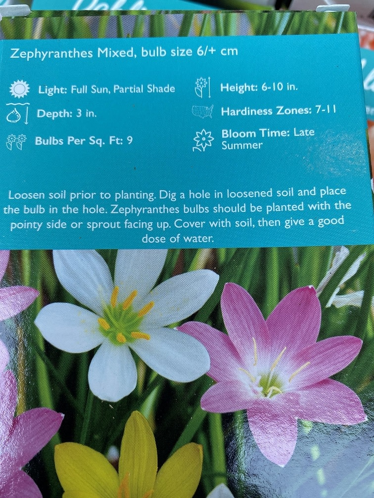 Zephyranthes mixed, Rain Lily boxed bulbs