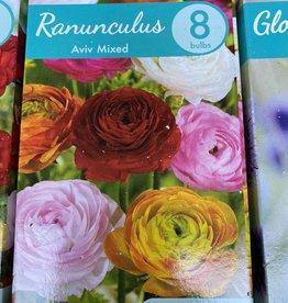 ranunculus aviv mixed, Mixed boxed bulbs