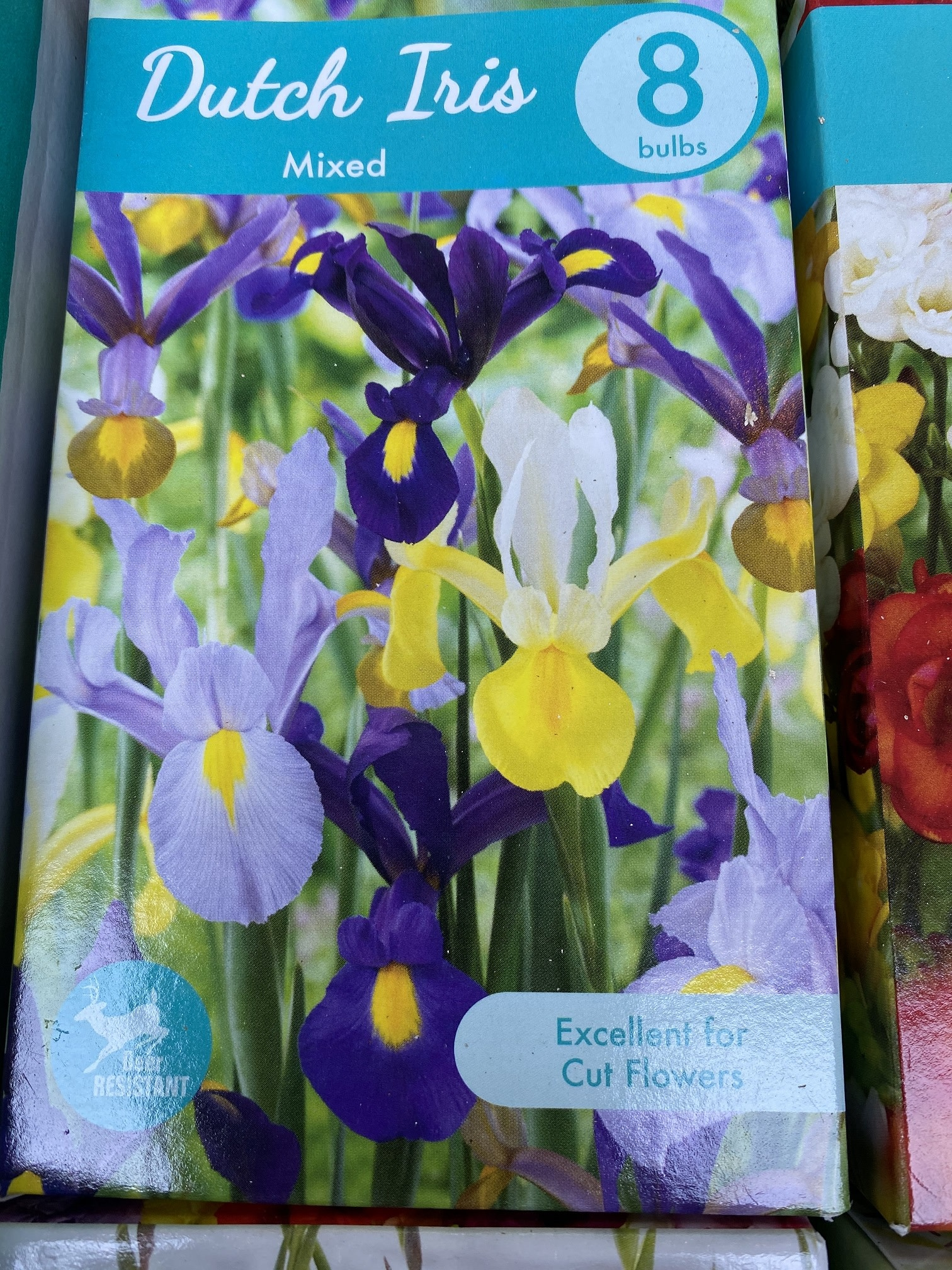 Iris Hollandica, Dutch Iris Mixed 8 boxed bulbs