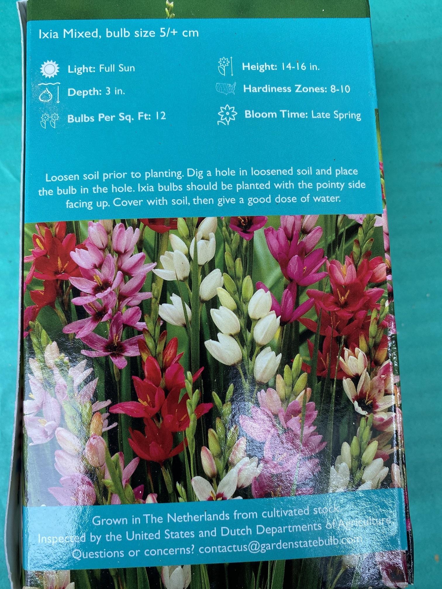 Ixia Mixed, Wand Flower 8 boxed bulbs