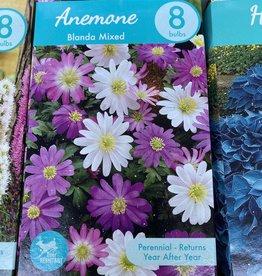 Anemone Blanda, Windflower 8 boxed bulbs