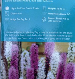 Liatris spicata mix, Blazing Star Bare root boxed