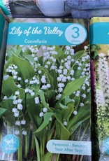 Convallaria majalis Lily-of-the-Valley, Boxed pips 3 qty