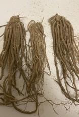 Bare root Asparagus Asparagus, Mary Washington, bare root
