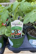 Tomato, Little Sicily- Vegetable, organic Qt