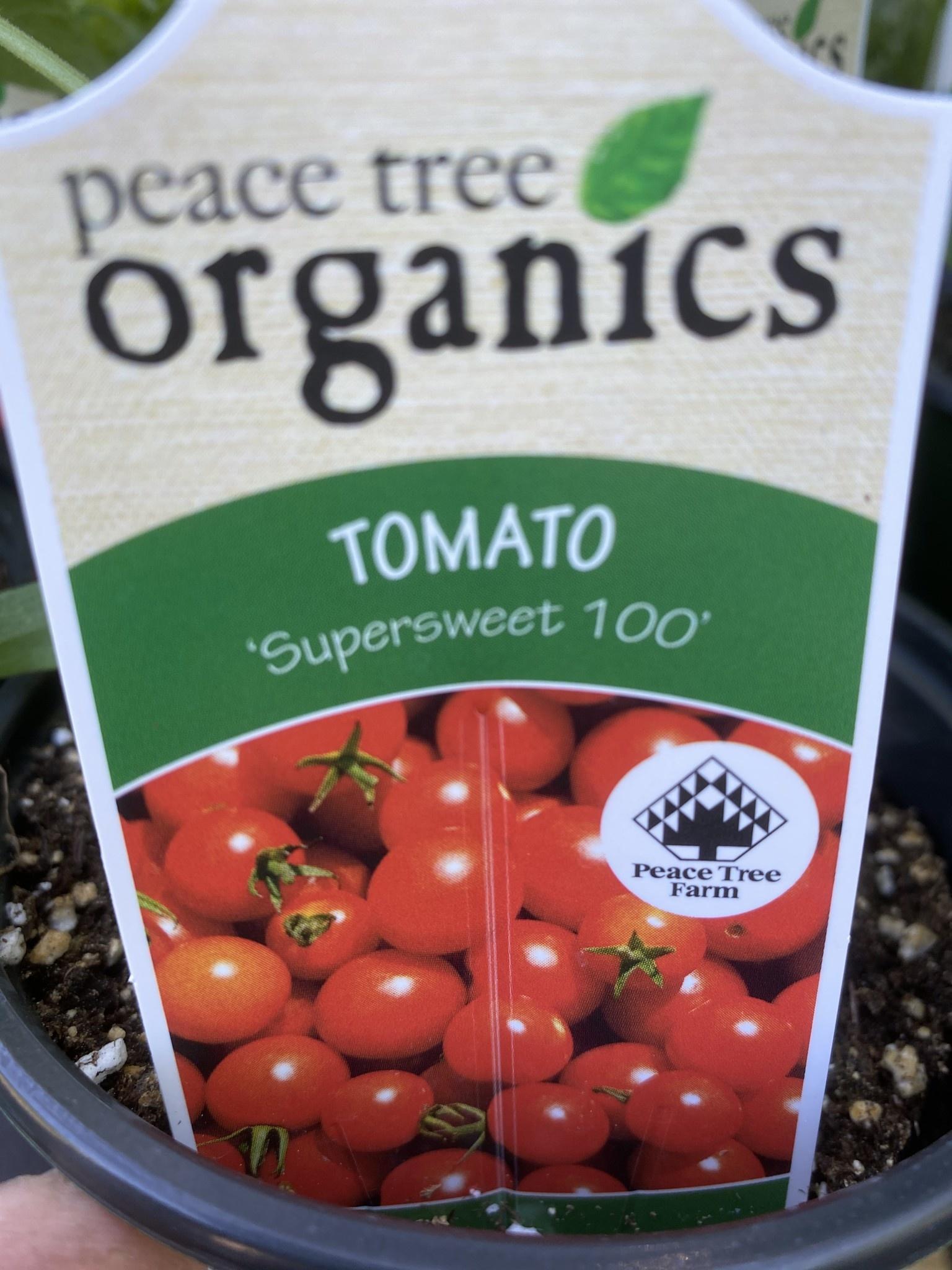 Tomato, Supersweet 100- Vegetable, organic Qt