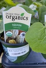 Squash Delicata - Vegetable, organic Qt