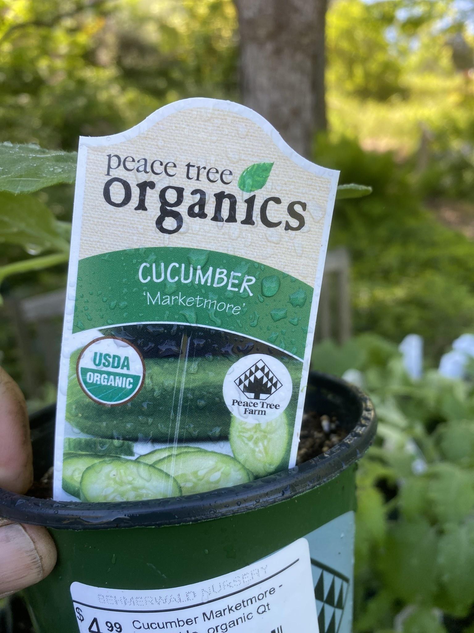 Cucumber Marketmore - Vegetable, organic Qt
