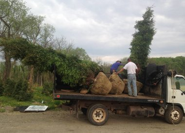 From the Nursery to Your Landscape