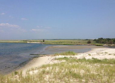 Plants that Grow Well at the Shore