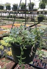 Basket, Hanging Succulents