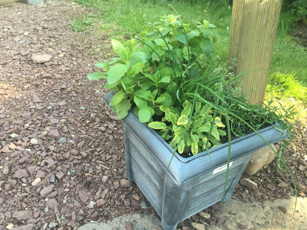 "Container Herbs, 12"" Round Pot"