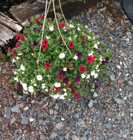 Annual, Hanging Basket Annual Premium mixed Hanging Basket,