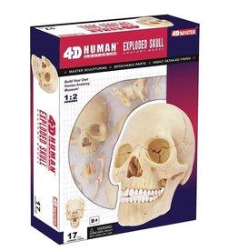Human Anatomy Skull Model by John Hansen