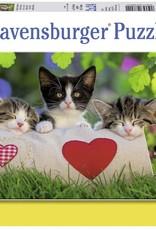 Sleepy Kitten 2 x24-pc Puzzles by Ravensburger
