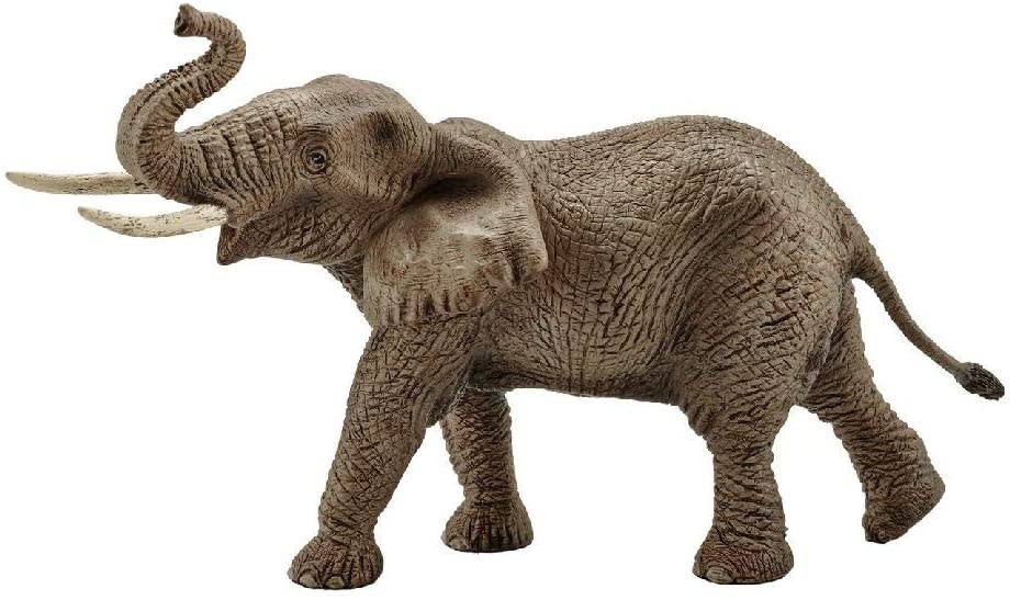 African Elephant, Male-Brown