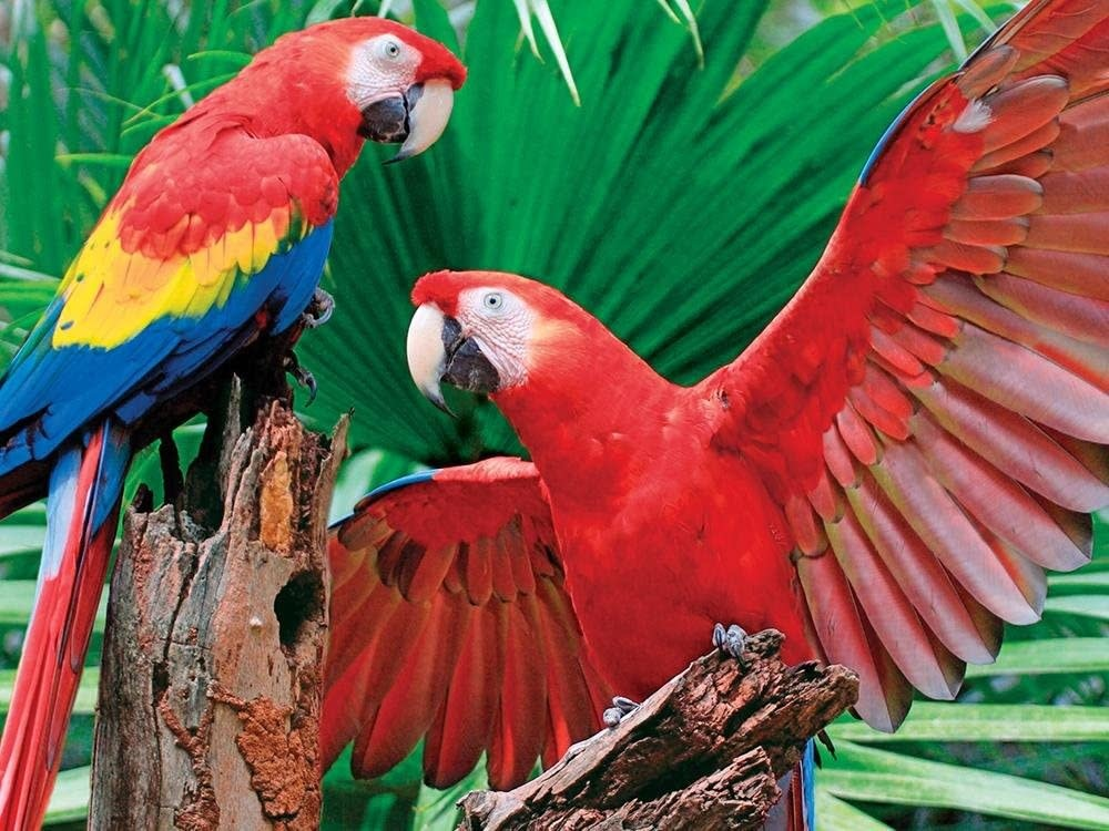 Scarlet Macaw 400-pc Puzzle by Springbok