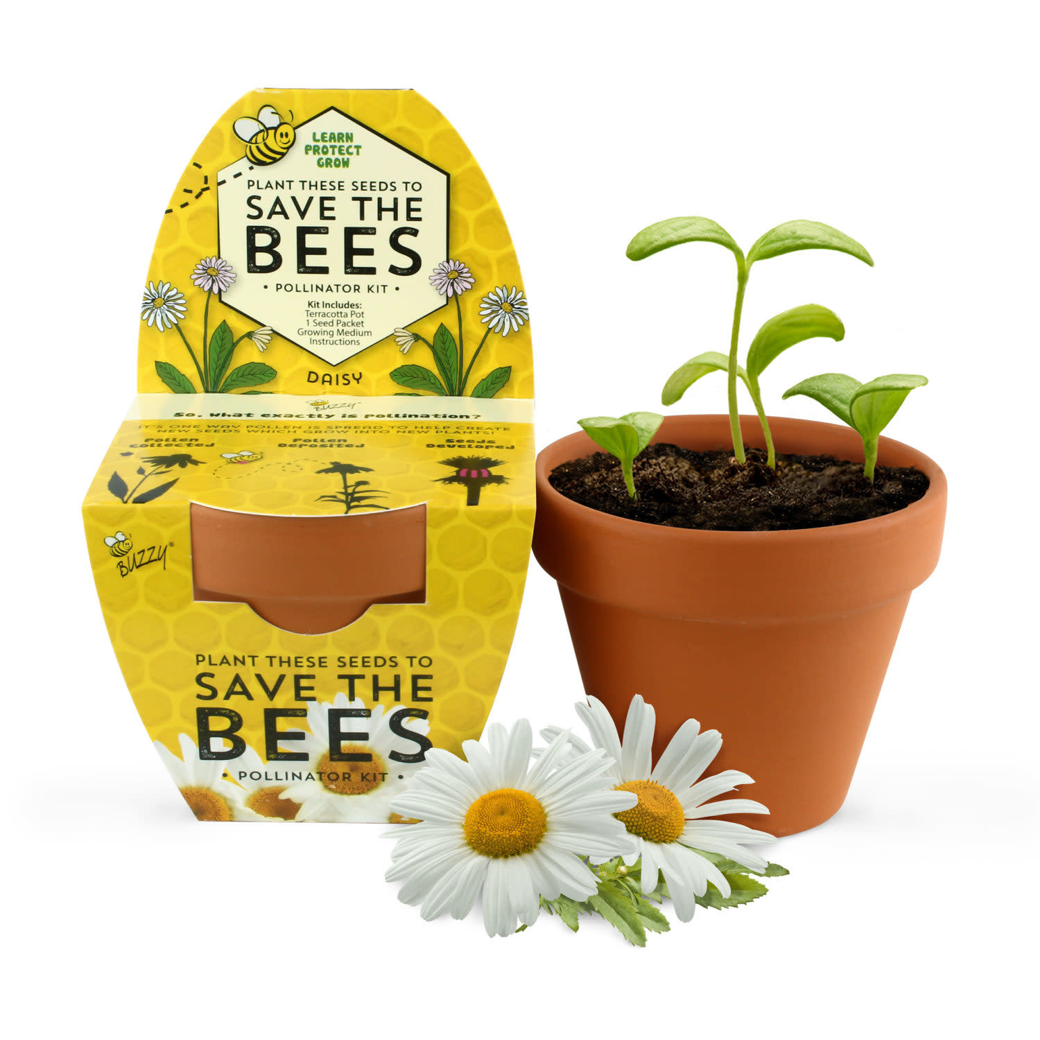 Save The Bees Daisy Kit by Buzzy